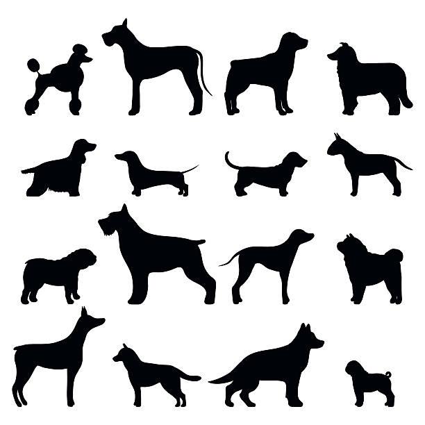 bildbanksillustrationer, clip art samt tecknat material och ikoner med dog breed vector black silhouette - tax