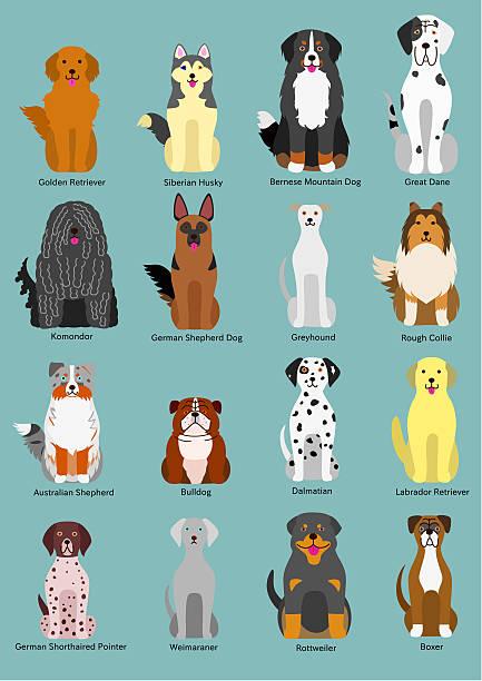 dog breed vector art illustration