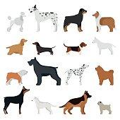Dog breed vector illustration