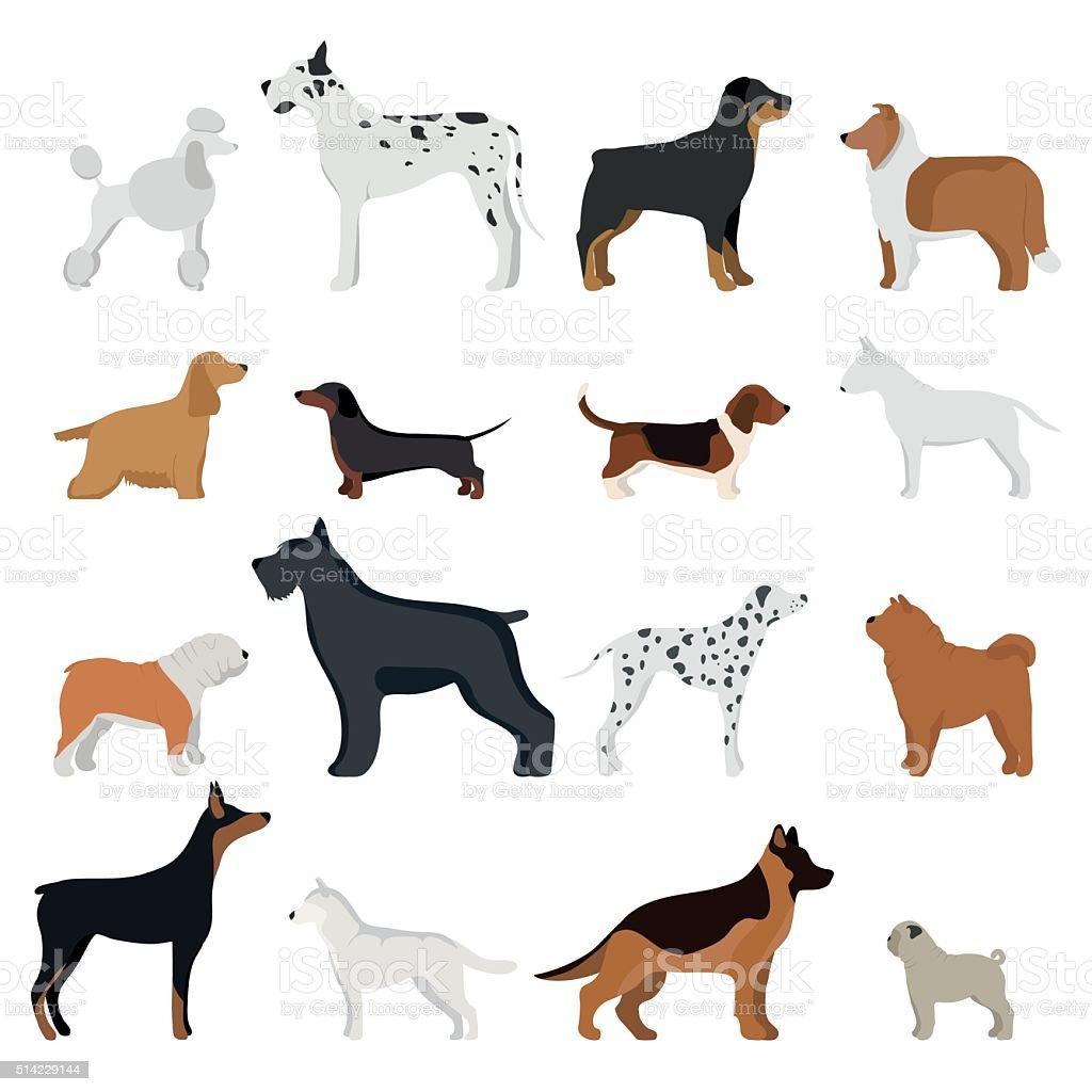 Dog breed vector illustration vector art illustration
