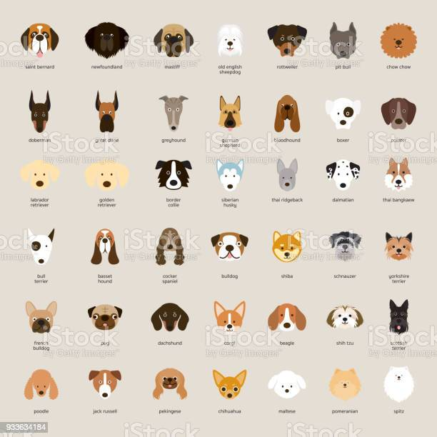 Dog breeds head set vector id933634184?b=1&k=6&m=933634184&s=612x612&h=rfpanoxnwqucf5pzed9jws7qfthaoe9is3dpyasl1ee=