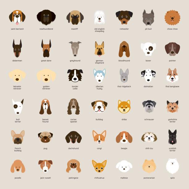 dog breeds, head set - dog stock illustrations, clip art, cartoons, & icons