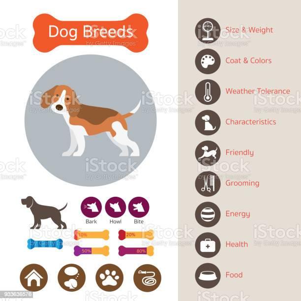 Dog breeds infographic vector id933636576?b=1&k=6&m=933636576&s=612x612&h=b3ah8n61unat88ris7fphylhxz2yxzs5oztsggolzwi=
