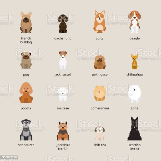 Dog breeds set small and medium size vector id933638246?b=1&k=6&m=933638246&s=612x612&h=ucc1eijgvgq1zbzfawfl431w lgzxxyt9femy52jwck=