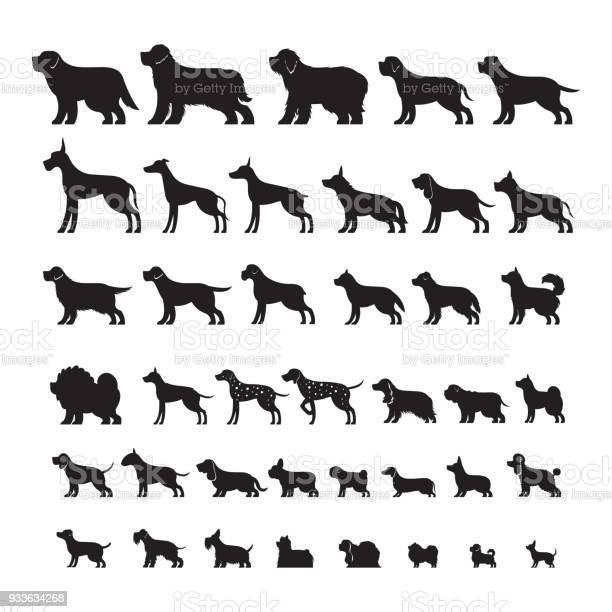 Dog breeds silhouette set vector id933634268?b=1&k=6&m=933634268&s=612x612&h=z2anrynpnx9l6ytrt9m3bwaxpfybuaozoitydgnedia=
