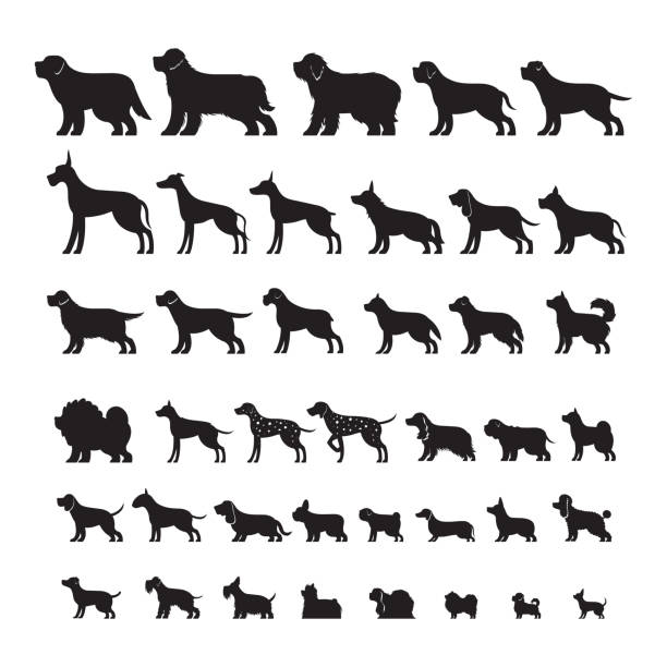 Dog Breeds, Silhouette Set Side View, Vector Illustration dog stock illustrations