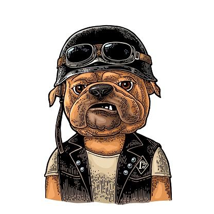 Dog bulldog dressed in the helmet and glasses. Vintage black engraving