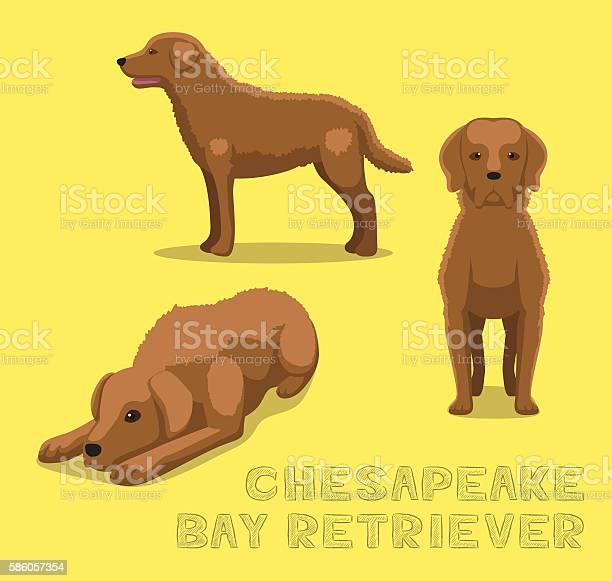 Dog chesapeake bay retriever cartoon vector illustration vector id586057354?b=1&k=6&m=586057354&s=612x612&h=fdh0 juwynwue p3agrhzos8xtwnf5vun jgngge7fg=