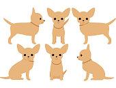 Dog Chihuahua pose