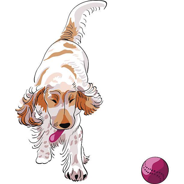 hund cockerel art spielt mit einem roten ball - hundehaarbögen stock-grafiken, -clipart, -cartoons und -symbole