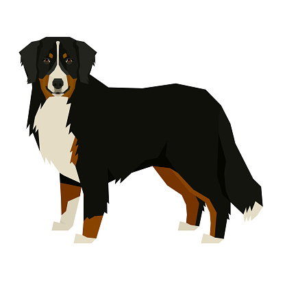 Dog collection Bernese Mountain Dog Geometric style Isolated object