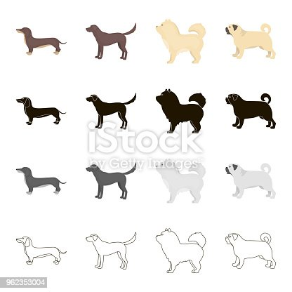 Dog dachshund, chow chow, pug breed, labrador. Dog breeds set collection icons in cartoon black monochrome outline style vector symbol stock illustration .