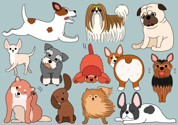 bildbanksillustrationer, clip art samt tecknat material och ikoner med hund doodle set - bum