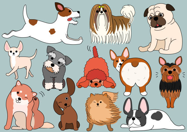 hund doodle set - schoßhunde stock-grafiken, -clipart, -cartoons und -symbole