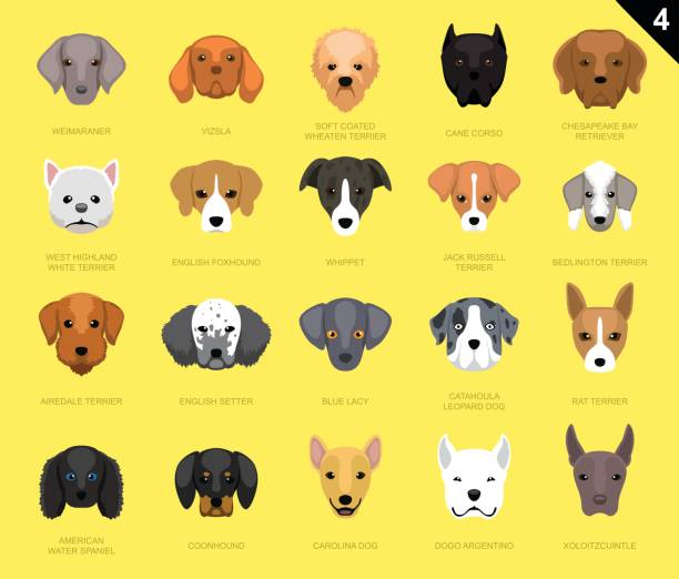 hund gesichter symbol cartoon 4 - vizsla stock-grafiken, -clipart, -cartoons und -symbole