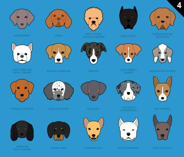 hund streicheln gesichter symbol cartoon 4 - vizsla stock-grafiken, -clipart, -cartoons und -symbole