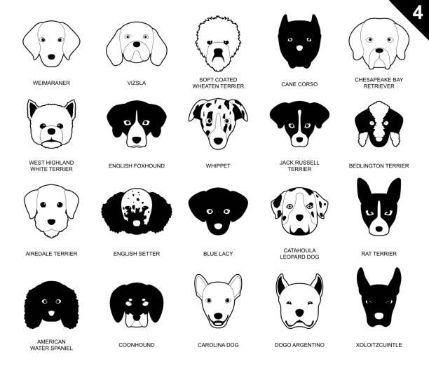 hund streicheln gesichter symbol monochrome cartoon 4 - vizsla stock-grafiken, -clipart, -cartoons und -symbole