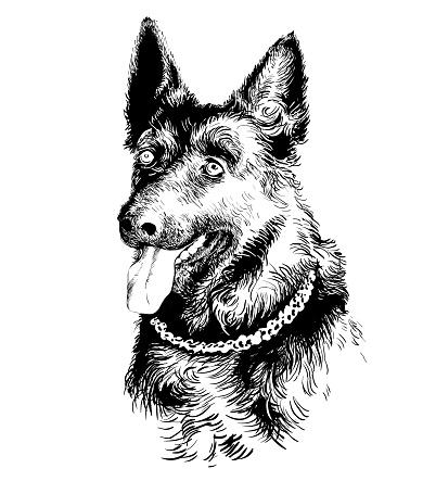 Dog German shepherd portrait