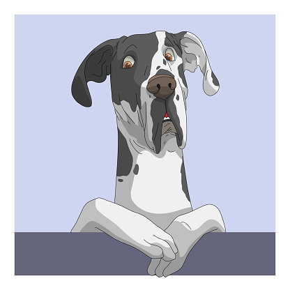 Dog Great Dane suspect face
