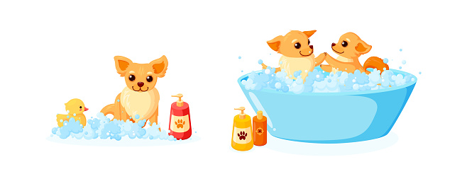 Dog grooming in a bathtub with rubber duck and shampoo. Set with chihuahua in soap foam isolated in white background. Vector illustration