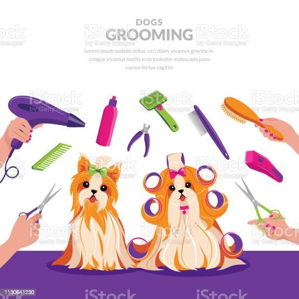 Dog grooming vector cartoon illustration pets care concept cute shih vector id1130641230?b=1&k=6&m=1130641230&s=612x612&h=smlea8bocmnx3iyquhsftzjn fxoc0hjvogbuzmb  0=