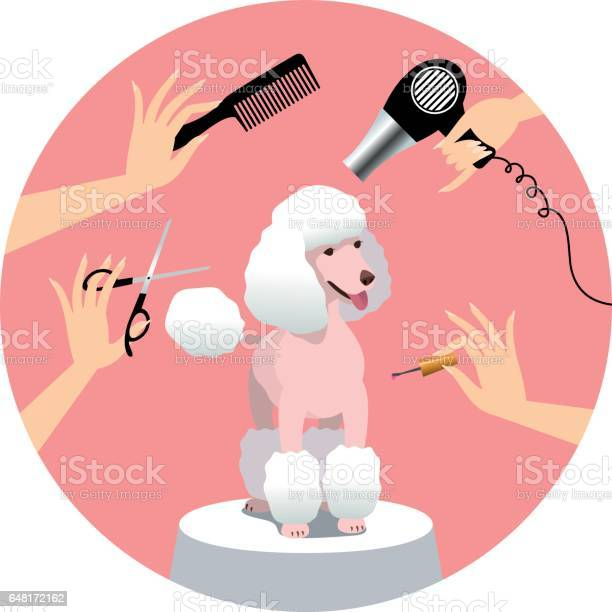 Dog grooming vector id648172162?b=1&k=6&m=648172162&s=612x612&h=xlmrii0zpriejalfwfmqzljildopxvu8heh0fdcodyo=