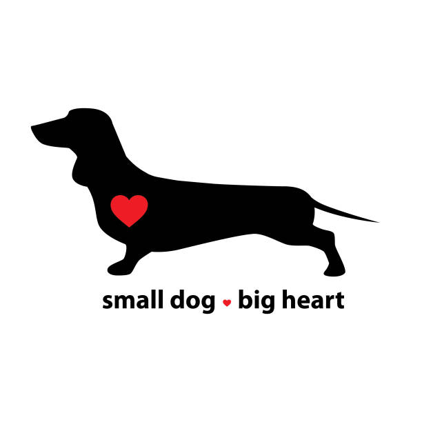 Download Dachshund And Heart Illustrations, Royalty-Free Vector ...