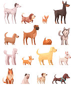 Dog breeds retro cartoon icons collection with husky poedel collie shepherd and dachshund dog isolated vector illustration