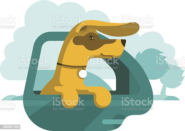 Dog is looking out of car window vector id480067459?b=1&k=6&m=480067459&s=612x612&h=dwrlkoi t levcskw792tewwrsmrz  qifvxhfhth s=