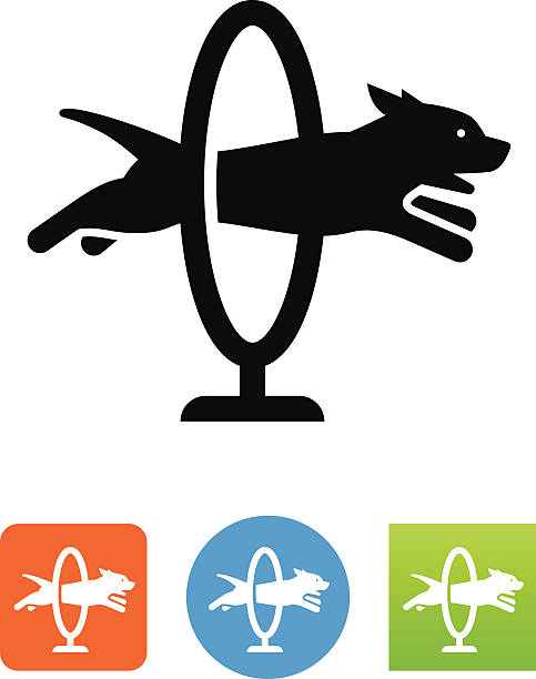 Dog Jumping Through A Hoop Icon Talented dog jumping through a hoop. Vector icons for video, mobile apps, Web sites and print projects. stunt stock illustrations