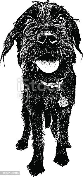 Engraving of a Labradoodle with Funny Expression
