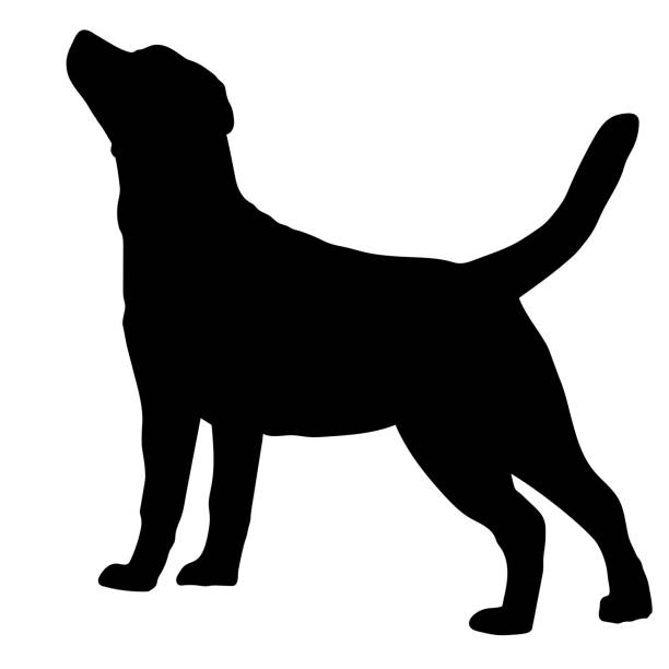 stockillustraties, clipart, cartoons en iconen met labrador retriever hondenras. silhouet - honden