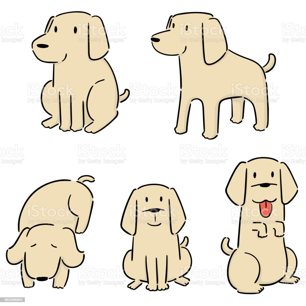 pies, labrador retriever - Grafika wektorowa royalty-free (Bazgroły - Rysunek)