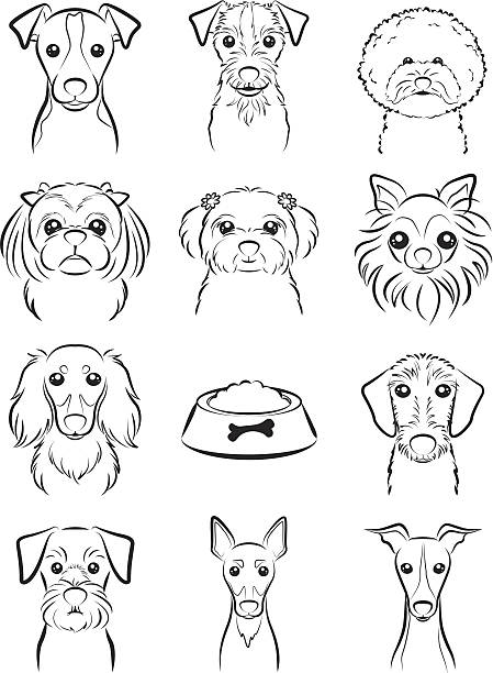Line Drawing Dog Face : Royalty free bichon frise clip art vector images