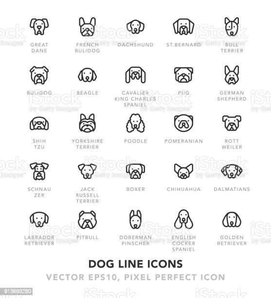 Dog line icons vector id913693280?b=1&k=6&m=913693280&s=612x612&h=gaycuji0byxzoovxa ceyngldoviboltigpdgzxcyyy=