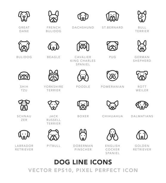 hund linie icons - schoßhunde stock-grafiken, -clipart, -cartoons und -symbole