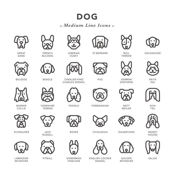 Dog - Medium Line Icons Dog - Medium Line Icons - Vector EPS 10 File, Pixel Perfect 30 Icons. dog stock illustrations