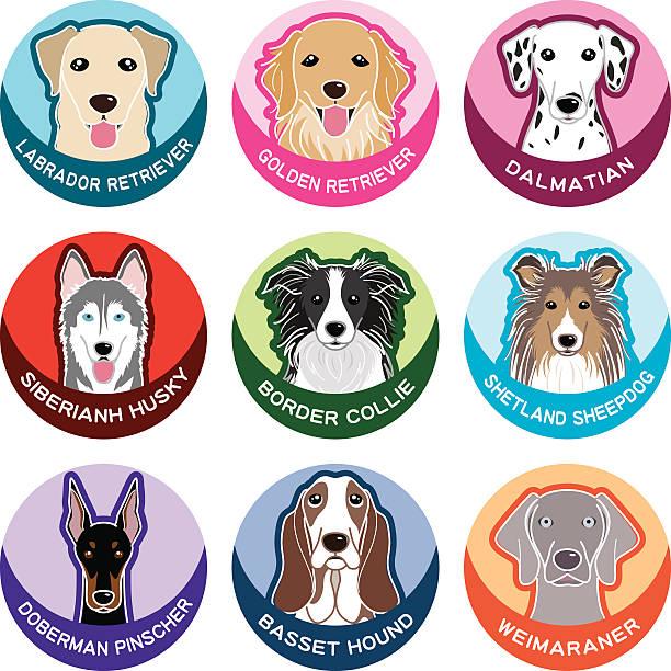 hund/namensschild - collie stock-grafiken, -clipart, -cartoons und -symbole