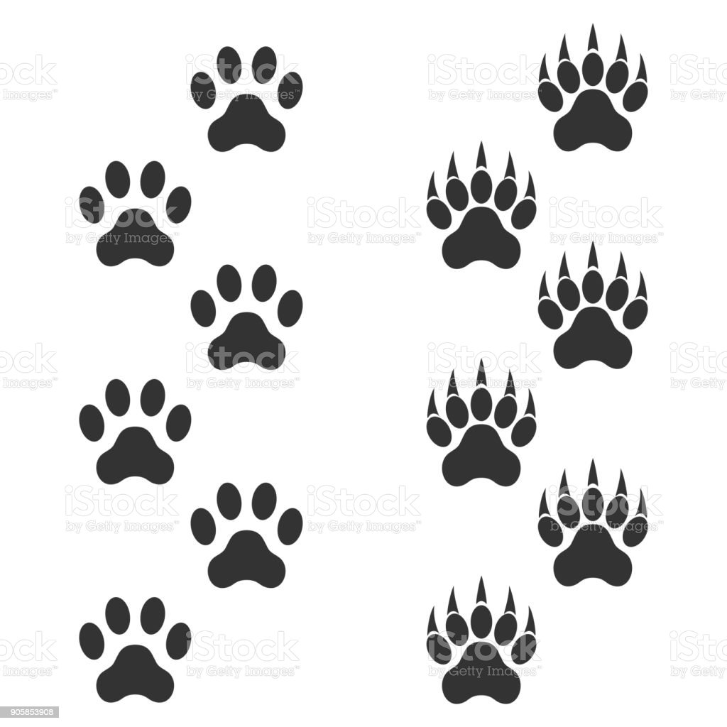 Dog Paw And Tiger Paw With Claws Trace Animal Black Footprints ...