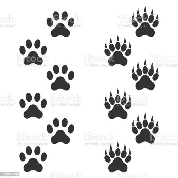 Dog paw and tiger paw with claws trace animal black footprints on vector id905853908?b=1&k=6&m=905853908&s=612x612&h=3ikvb lp1mtkceeefdlqrbhpacwhdyloh8 jonzmwym=