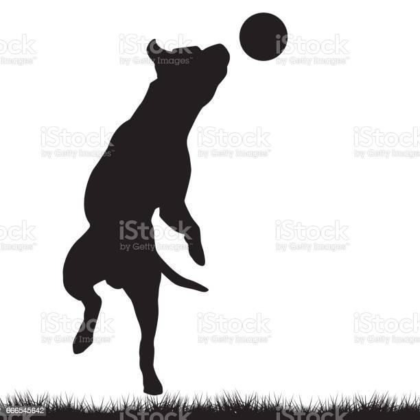 Dog playing with ball vector id666545642?b=1&k=6&m=666545642&s=612x612&h=ixsoeicwbcq3idyxb1icfioaykkygdfwewxze5mhdgk=