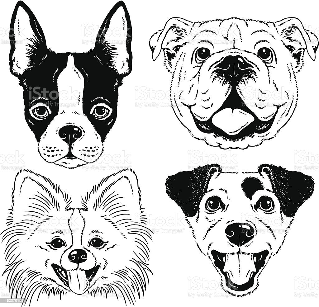 Dog portraits: Boston Terrier, English Bulldog, Pomeranian, Jack Russell vector art illustration
