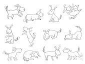 Dog - poses