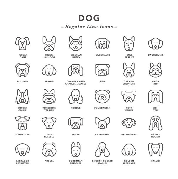 Dog - Regular Line Icons Dog - Regular Line Icons - Vector EPS 10 File, Pixel Perfect 30 Icons. husky dog stock illustrations