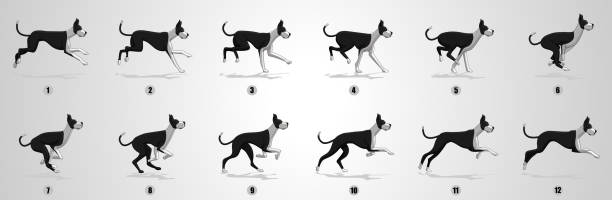 Dog Run cycle animation Sequence Dog Running animation frames and sprite sheet, Great dane dog running sequential series stock illustrations
