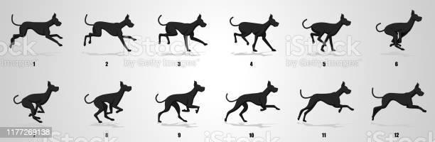 Dog run cycle animation sequence vector id1177269138?b=1&k=6&m=1177269138&s=612x612&h=b4xw2bp0ts5nyb rsckroteb7bqooz2drgit9surmys=