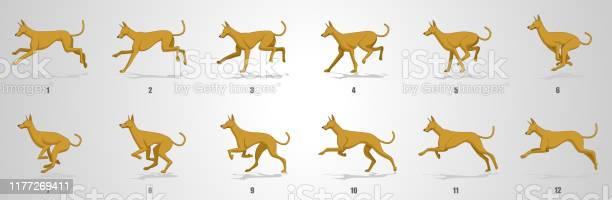 Dog run cycle animation sequence vector id1177269411?b=1&k=6&m=1177269411&s=612x612&h=igu6q rvnosumhoozx1isnlty20yzl9lq2a0 k2tm0a=