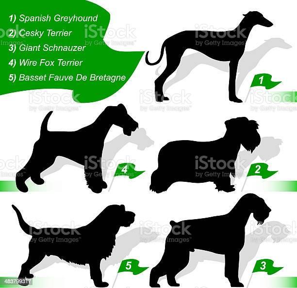 Dog show vector id483799317?b=1&k=6&m=483799317&s=612x612&h=sictcgsqpz2ghf7cniwplzbzcuk vgquiiiwknxxh5q=