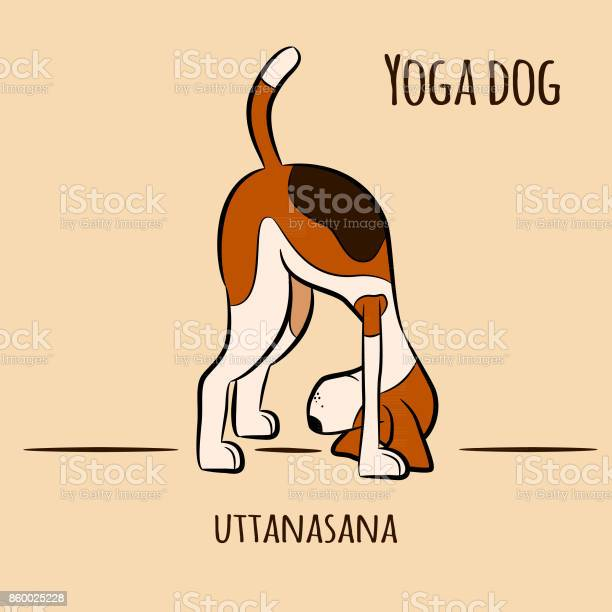 Dog shows yoga pose uttanasana vector id860025228?b=1&k=6&m=860025228&s=612x612&h=u gvxc4ku0sm wkrn lth08lxnytzr4ih qxaercwim=