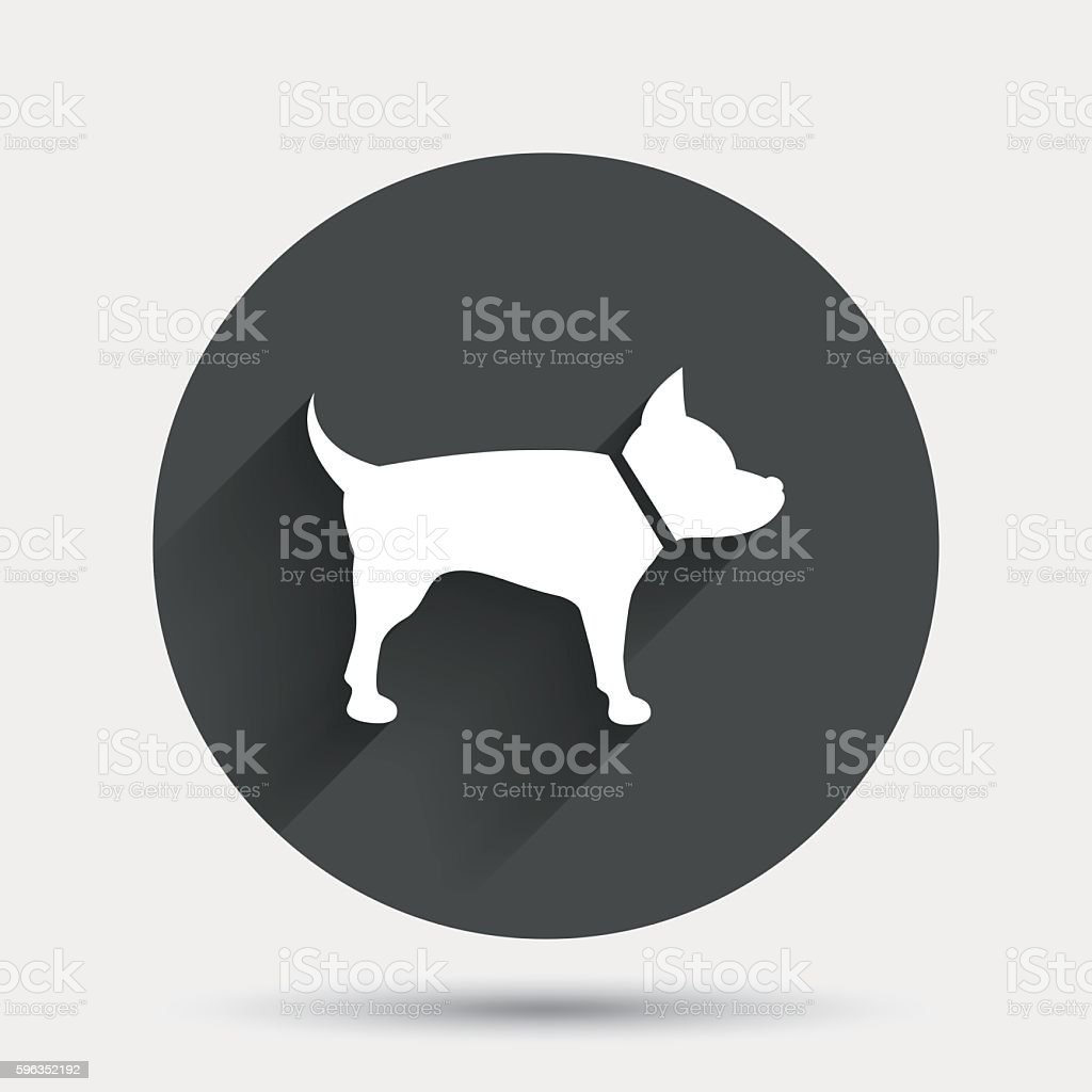 Dog sign icon. Pets symbol. royalty-free dog sign icon pets symbol stock vector art & more images of animal